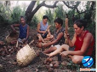 Quebradeiras de coco