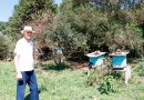 Secretaria de Agricultura vai investir na apicultura
