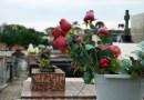 Saúde alerta sobre cuidados com a dengue nos cemitérios