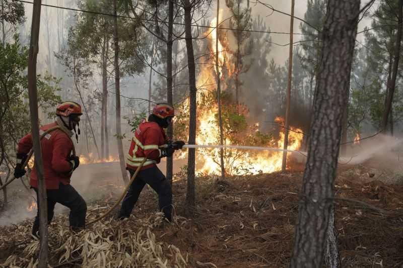 Sertã: Mais de 150 bombeiros combatem chamas na freguesia de Cernache