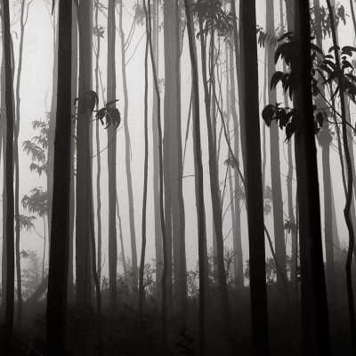 Galicia, Árboles y niebla, Muros, 2016
