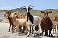 Los ganaderos también sufren la sequía
