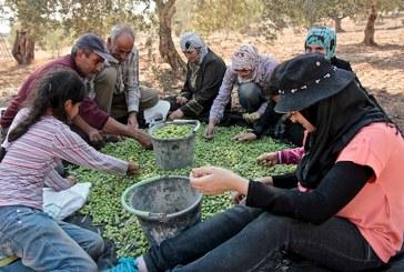 Descubriendo la agricultura de los territorios palestinos