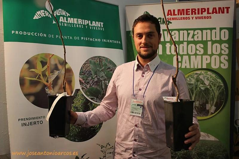 Plantas de pistachos de Almeriplant