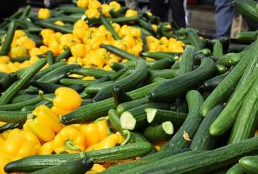Las OPFH's retiran del mercado 4 millones de kilos de pepino