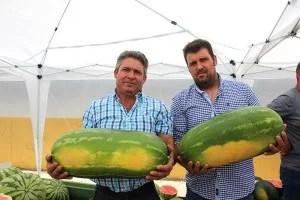 Agricultores de sandías de Adra