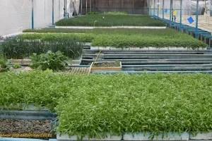plantas-reservorio-en-vitalplant