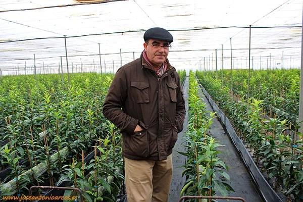 Luis García Lorente es gerente de Viveros Citroplant.