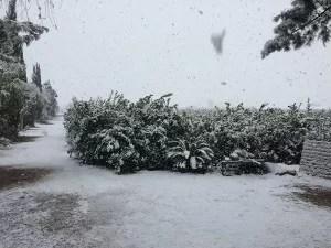 Nieve en la huerta de Murcia. enero 2017