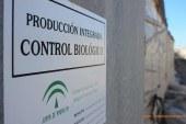 Clasificación de insectos plaga en Almería