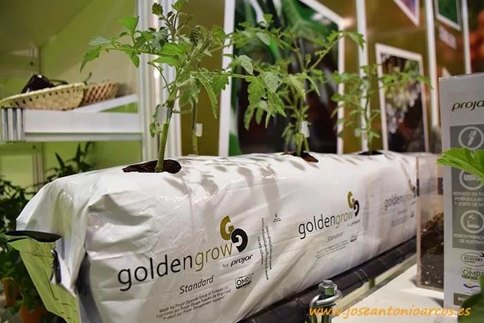 Golden Grow de Projar.