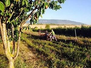 Irati Organic. Finca Bordablanca de Josenea en Navarra.