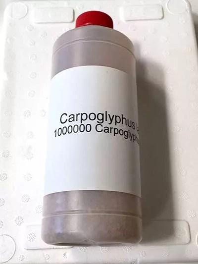 Bote-con-1-millón-de-ejemplares-de-Carpoglyphus