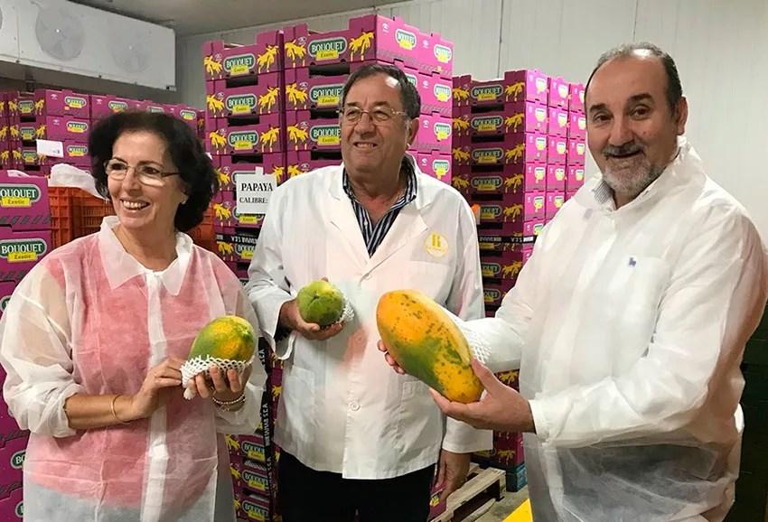 Papaya-de-Almería-y-Hortamar