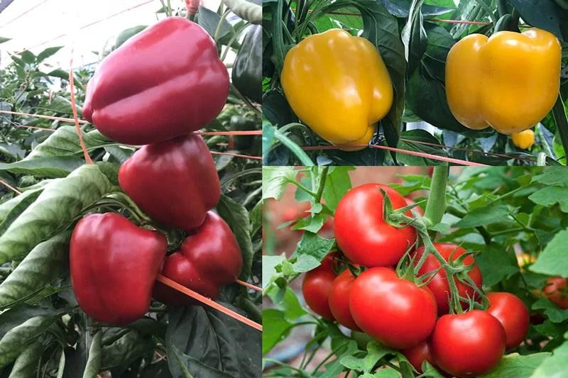 Color-intenso-de-frutos-con-Ecoculture