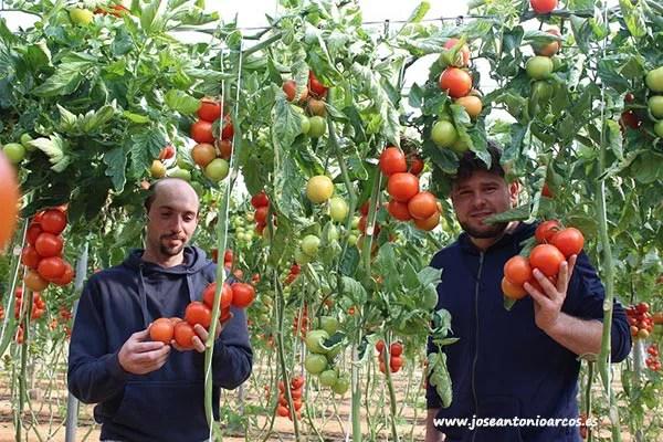 Mario y Baltasar son jóvenes productores de tomate.