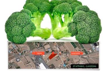 Día 14 de febrero. Jornada de brócoli de Seminis