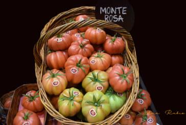 El tomate Monterosa entra en ecológico