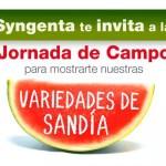 Día 12 de julio. Jornada de campo de sandía de Syngenta. Murcia