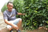Los tomates del verano murciano en Lorca y Mazarrón
