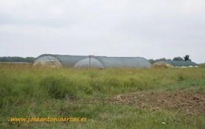 Invernaderos en Serbia.