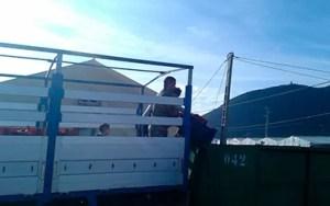 Crisis del pepino. Los agricultores de Granada retiran pepinos por los bajos precios.