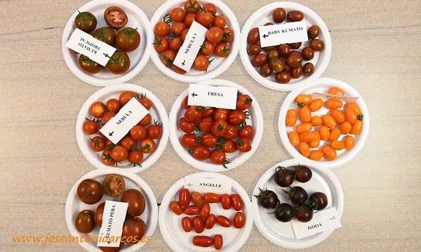 Variedades de tomate cherry y en segmento pequeño de Syngenta - joseantonioarcos.es