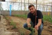 Cristalplant promueve los reservorios de auxiliares
