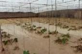La DANA da un duro golpe al sector hortícola