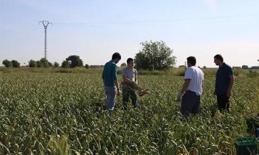Uma empresa de Almeria, o Kimitec Group, utiliza as micorrizas como um dos principais argumentos para propor um movimento agrobiótico na agricultura-joseantonioarcos.es