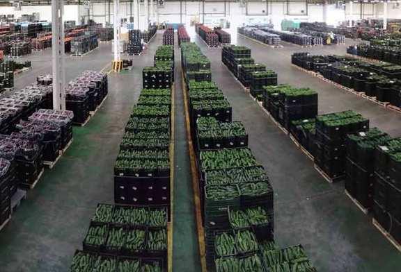 Agroponiente eleva sus ventas a supermercados durante el Covid19