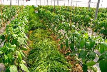 Setos vegetales y plantas refugio para la supervivencia de los auxiliares