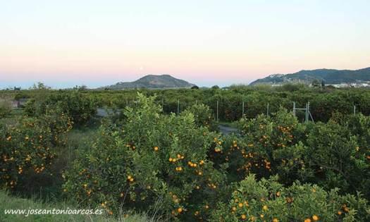 Cítricos en la comarca de la Safor, al sur de Valencia. /joseantonioarcos.es