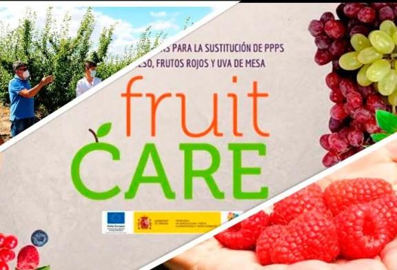 Berries, frutales y uva con mínimas materias activas. La ciencia busca alternativas