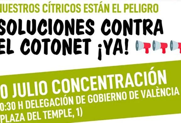Asaja y La Unió protestan este viernes en Valencia por los daños del Cotonet