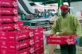 110 positivos por Covid sobre 3.500 trabajadores en centrales de fruta catalanas