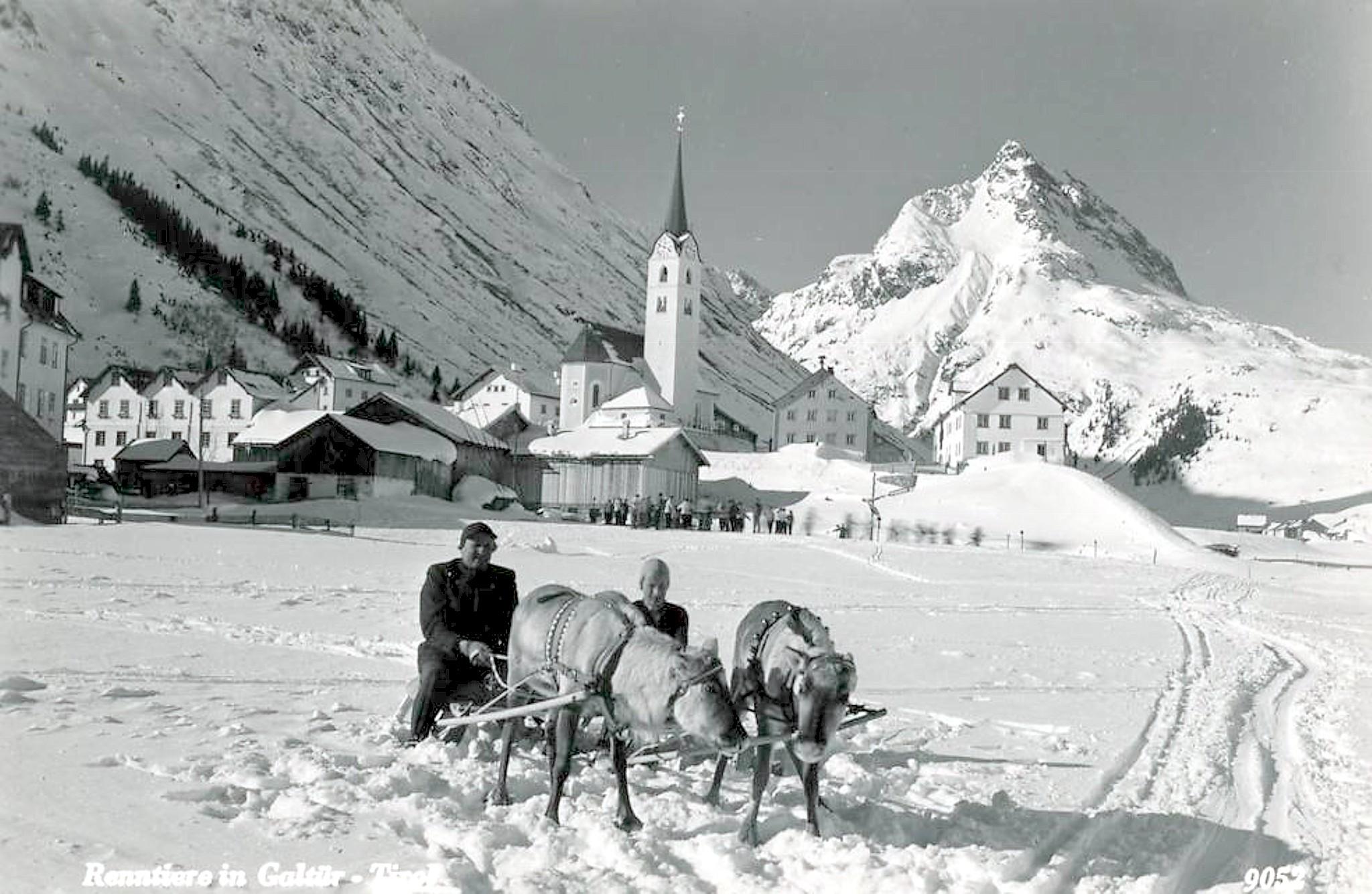Galtür 1955, Rentiere im Winter