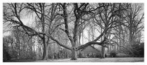 Wald / Bäume