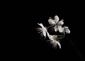 Blumen und Natur