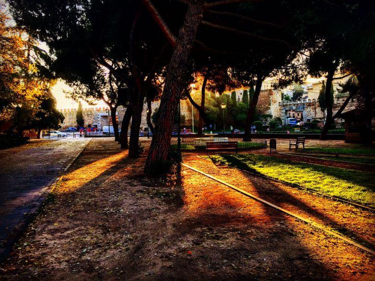 troncos-y-luz