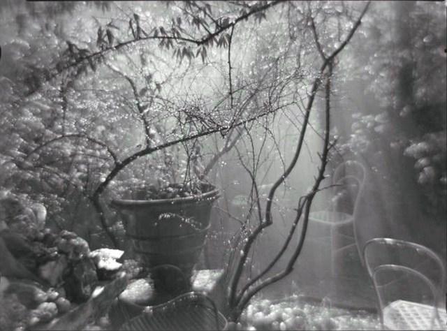 jardin triste