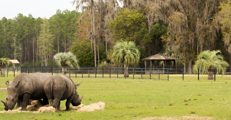Rhino Landscape