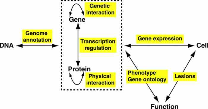 what is the relationship between gene expression and cell function