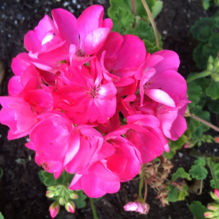 Spring Flower 001 (10)