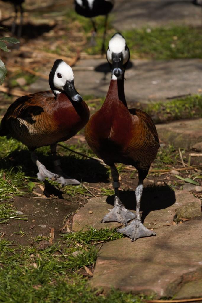 Bird At Woodland Park Zoo