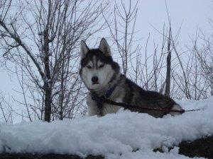 December 27, 2012: Aspen