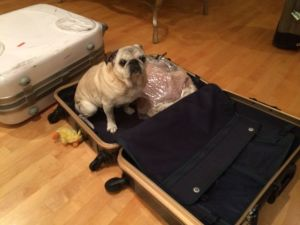 Bubba wants to come with us to Tokyo!