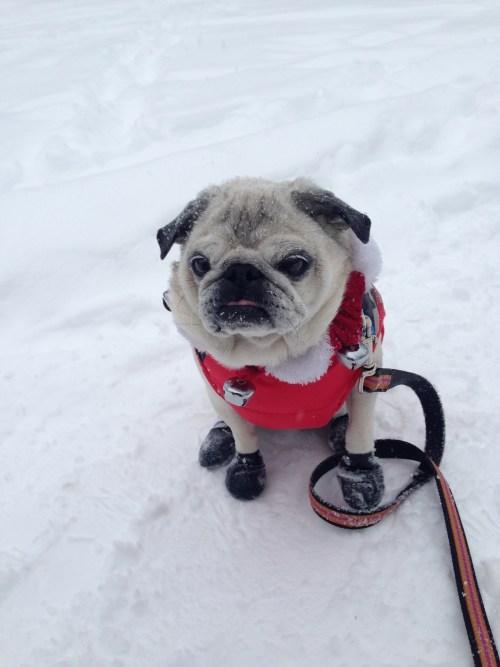 December 13, 2014: Snow Dogs!