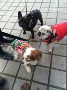 January 16, 2016: Edits, Dogs, And Tasty Coffee Drinks!