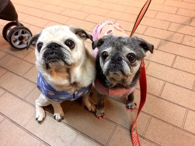 February 26, 2017: The Doggy Update! Hiatus Winds Down!